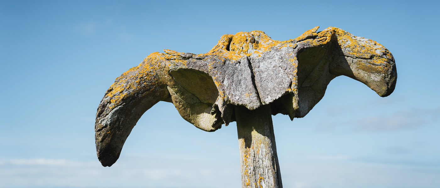 A lichen covered whale bone mounted as a monument near the Brough of Birsay on Orkney Mainland