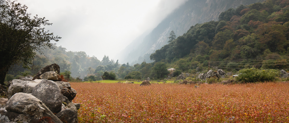 Wildflowers in afternoon sunshine and mist on the trail to Dharapani